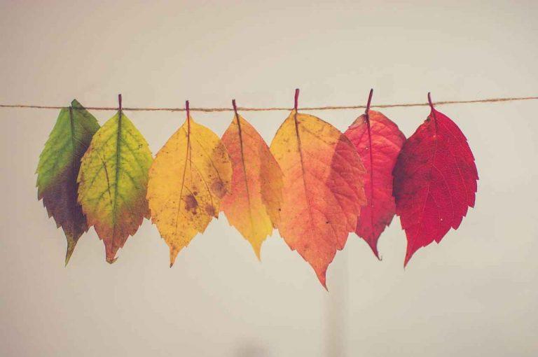 una de estas hojas muestra tu color preferido