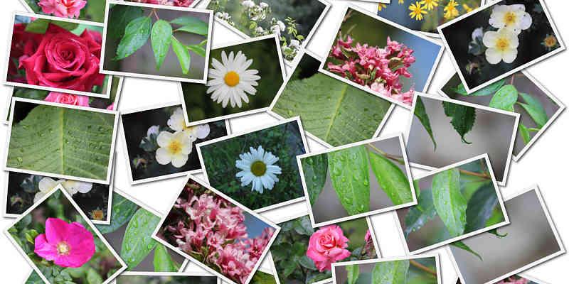 collage hecho con el editor de fotos